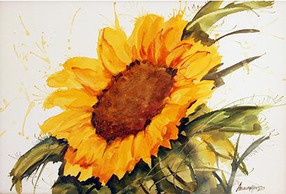 aquarela-bel-16171490.png